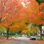 Northeast: Community Life