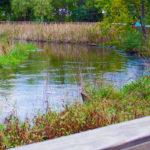 St. Louis Park: Meadowbrook Neighborhood